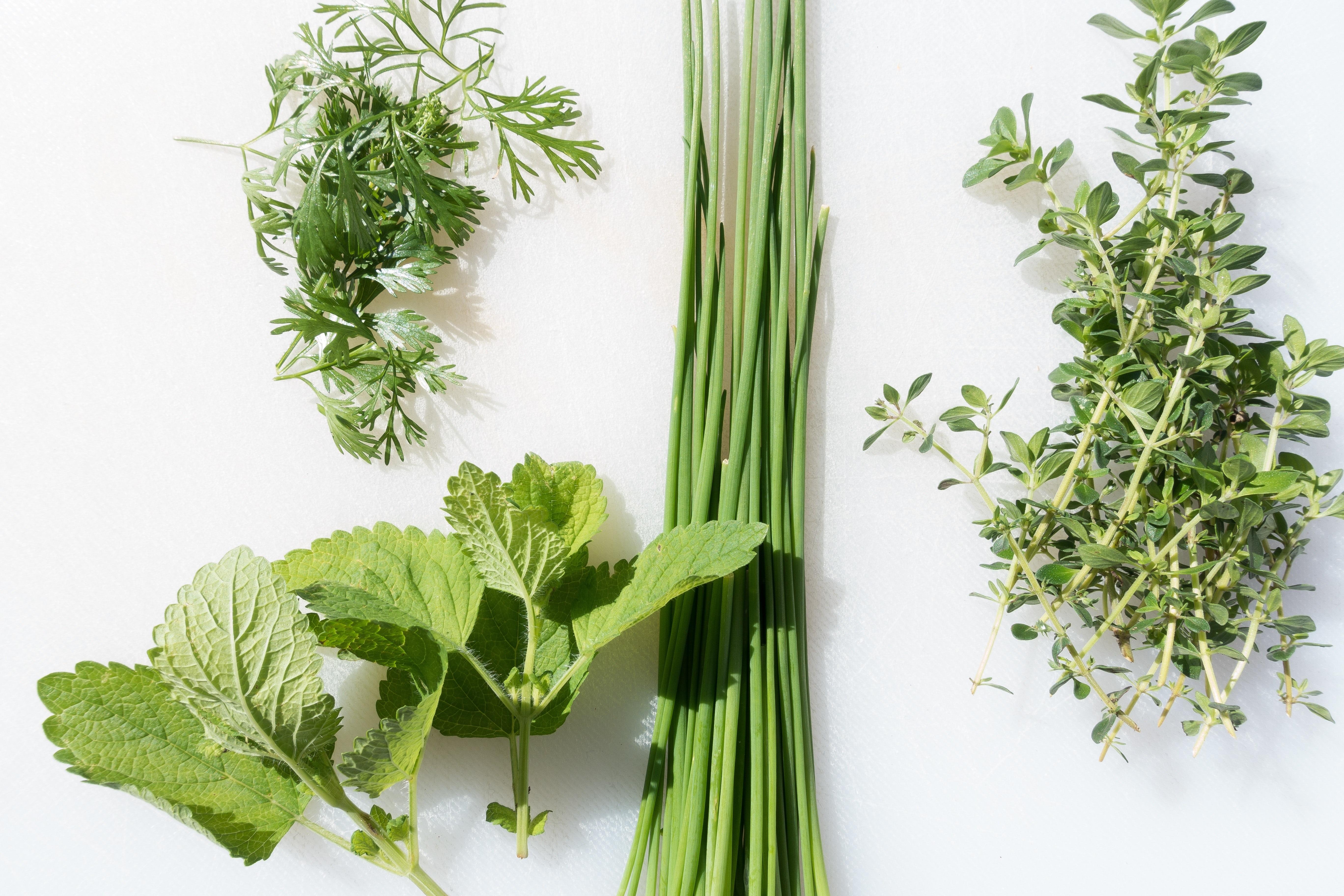 Herbes (persil, romarin, thym...)