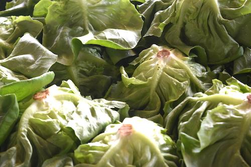 Soupe à la salade verte