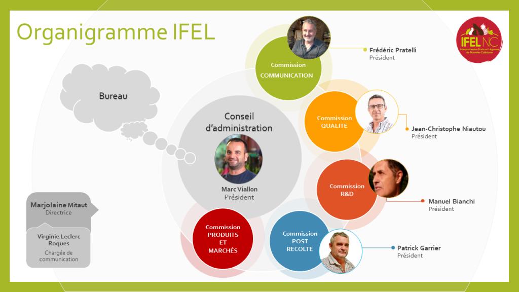 Organigramme IFEL 03/03/2020